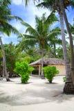Kokosnussbaumpaare stockfoto