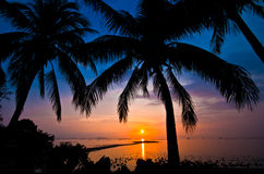 Kokosnussbaumschattenbild am Sonnenuntergang Lizenzfreies Stockbild