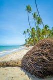 Kokosnussbaumwurzeln Lizenzfreie Stockbilder