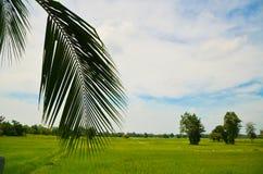 Kokosnussblätter Lizenzfreies Stockfoto