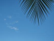 Kokosnussblätter auf dem Himmelhintergrund Lizenzfreie Stockfotos