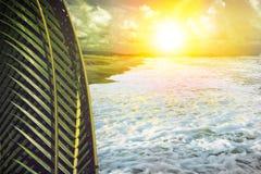 Kokosnussblatt und Seestrand mit Sonnenlicht Lizenzfreie Stockfotos