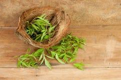 Kokosnussblattgrün Stockbild