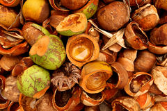 Kokosnussdetail Stockfotografie