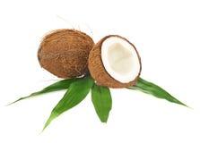 Kokosnussfrüchte über den Blättern Stockbild