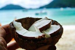 Kokosnussfrucht lizenzfreie stockbilder