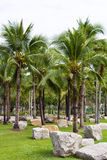 Kokosnussgarten Lizenzfreies Stockbild