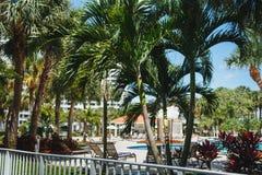 Kokosnussgr?n-Palmen unter der Sonne, Pool mit blauem Wasser, tropischer sch?ner Hintergrund Sommer, Tourismus, Feiertage, stockfoto