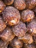 Kokosnusshintergrund Kokosnüsse von Indien lizenzfreies stockbild