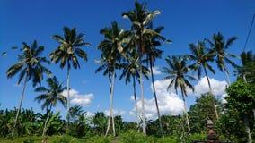Kokosnusslandschaft stockbild