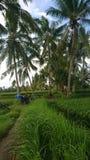 Kokosnusslandschaft stockfoto