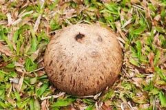 Kokosnussleere hülle Stockfotografie