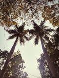 Kokosnusspaare lizenzfreie stockfotografie