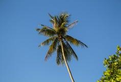 KokosnussPalme auf Himmelhintergrund Sommerferien-Fahnenschablone mit Platz für Text Stockbild
