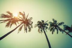 KokosnussPalme auf Strand im Sommer mit Weinleseeffekt stockfotos