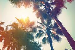KokosnussPalme auf Strand und Sonnenlicht mit Weinlese tonte Effekt stockbild