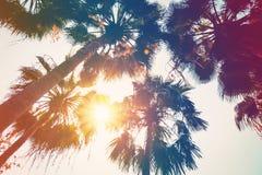 KokosnussPalme auf Strand und Sonnenlicht mit Weinlese tonte Effekt lizenzfreies stockbild