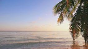 KokosnussPalme gegen blauen tropischen Himmel und Meer Klappstuhl auf Strand in Brighton stock video