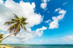 KokosnussPalme in Strand Autre Bord stockbilder