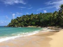 KokosnussPalme am Strand von Moorea, haarscharfer Türkis-blauer South- Pacificozean Stockfoto