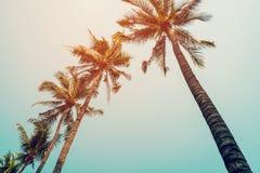 KokosnussPalme und blauer Himmel mit Weinlese filtern stockfotografie