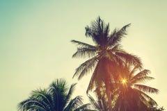 KokosnussPalme und Himmel auf Strand mit der Weinlese getont stockfotografie