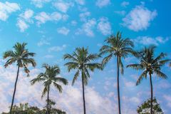 KokosnussPalmegruppe auf schönem blauem Himmel mit natürlichen Mustern der Wolken für Hintergrund stockbild