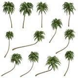 Kokosnusspalmen Lizenzfreie Stockfotografie