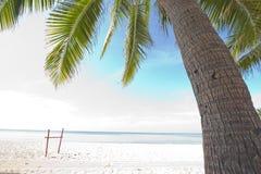Kokosnusspalmen auf dem Strand Stockfoto