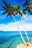 Kokosnusspalmen auf Sand setzen in den Tropen auf den Strand Lizenzfreie Stockfotos