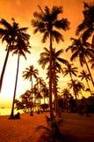 Kokosnusspalmen auf Sandstrand in den Tropen auf Sonnenuntergang Lizenzfreies Stockfoto