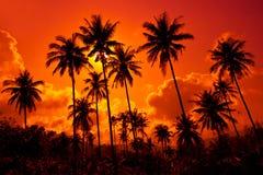 Kokosnusspalmen auf Sandstrand in den Tropen auf Sonnenuntergang stockfoto