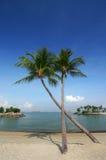 KokosnussPalmen auf Strand Stockfotografie