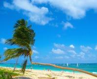 Kokosnusspalmen auf weißem sandigem Strand, karibische Seeküste, Dominikanische Republik Lizenzfreie Stockbilder