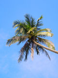 Kokosnusspalmen im Himmel Lizenzfreies Stockfoto