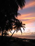 Kokosnusspalmen im Sonnenuntergang Stockbild