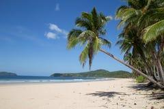 Kokosnusspalmen an Nacpan-Strand Stockfotografie