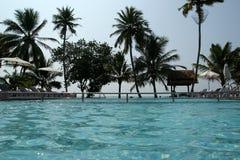 Kokosnusspalmen um das Pool Stockfoto