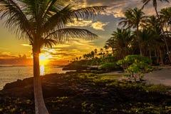 KokosnussPalmen und schwarze Felsen auf dem Strand während des sunse Lizenzfreie Stockbilder