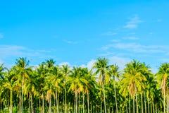 Kokosnussplantage Stockbild