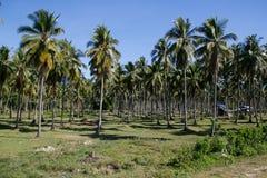 Kokosnussplantage, Coron, Busuanga-Insel, Palawan-Provinz, Philippinen Lizenzfreie Stockfotografie