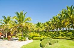 Kokosnussplantagen. Stockfotografie