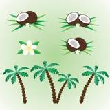 Kokosnusssatz Lizenzfreies Stockfoto