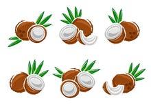 Kokosnusssatz Vektor Stockfotos