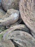Kokosnussschale stockfotografie