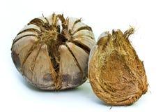 Kokosnussshell. Lizenzfreie Stockbilder
