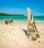 Kokosnussstamm Stockbilder