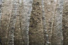 Kokosnussstammbeschaffenheit Lizenzfreie Stockfotografie