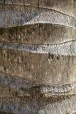 Kokosnussstammbeschaffenheit Lizenzfreies Stockfoto