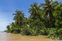 Kokosnusswald Stockfoto